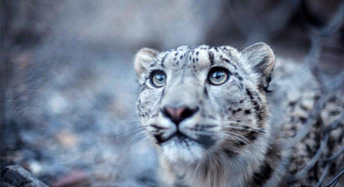 Snow Leopard Conservation Centre in Uttarkashi forests