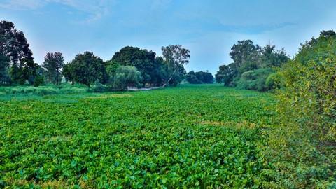 Wetlands in Punjab